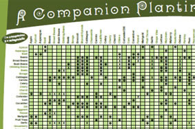 companion-planting