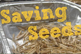 saving-seeds