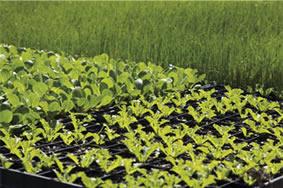seedling-trays
